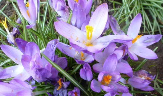 Die Sonne bringt die Blüten zum blühen