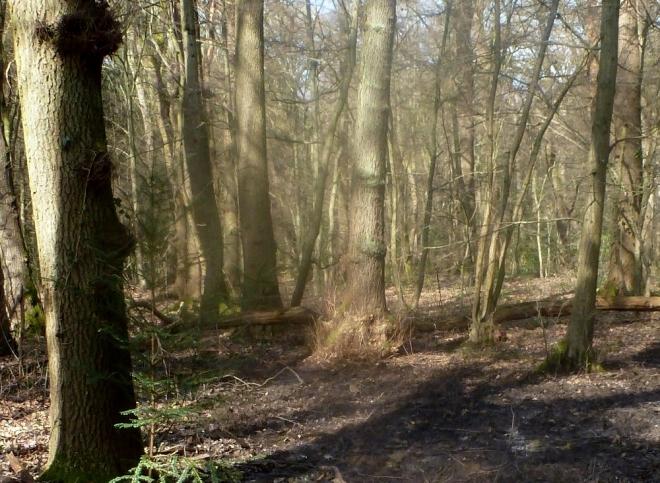 Der Wald in der Saaler Mühle