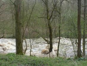 Ahr ging über die Ufer Bäume im Wasser