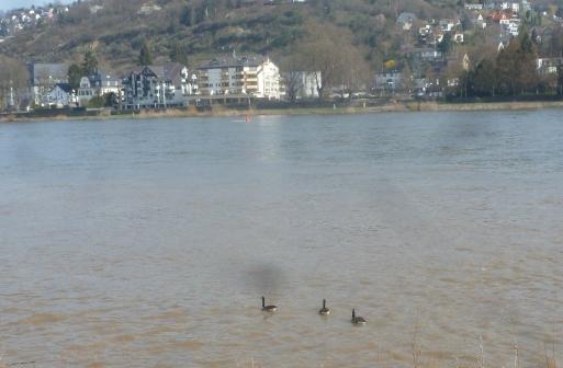 Rheinufer von Linz