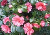 rosane Rosenbusch