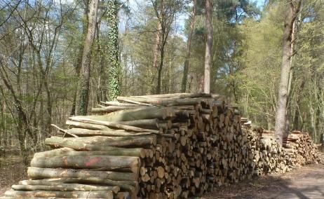 Holzstapel im Wald von Saalermühle