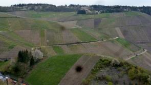 Blick auf die Weinberge zu Dernau