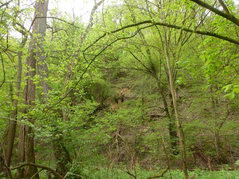 Mitten im Wald an der Ahr