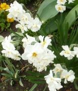schöne weiße Blüten