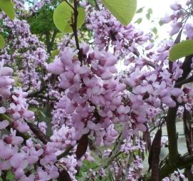 Blütenbaum mit Samen