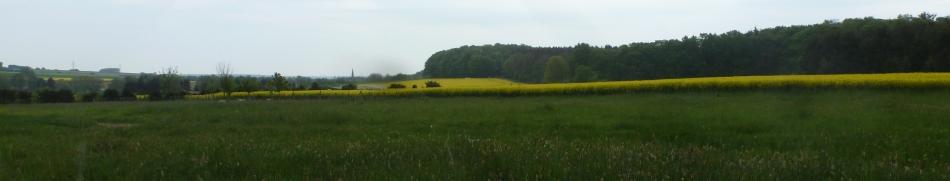 Rapsfeld bei Dernau