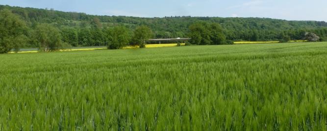 Gerstenfeld im Hintergrund die Autobrücke