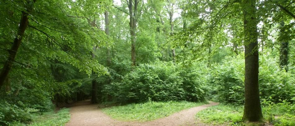 Der Wald ein Paradies für die Vogelwäld