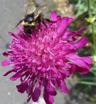 schöne Blüte mit Biene