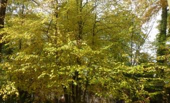 Laubbaum am See noch vom Herbst nichts zu sehen