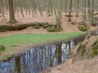 Saalermühlenbach und Buschwindröschen