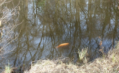 Der einsame Goldfisch an der Zeltkirche