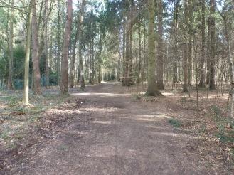 Weg im Saaler Mühlenwald