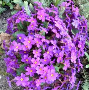 wunderschöne Blüten